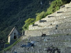 Machu Picchu Llama family