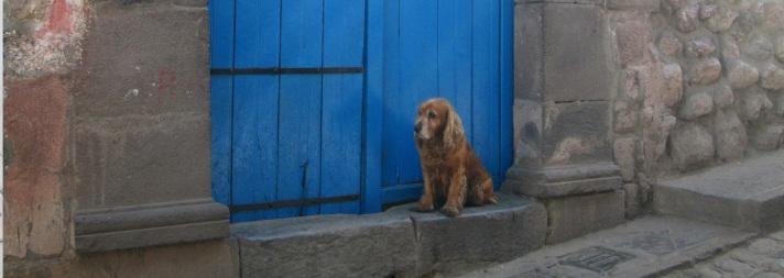 loner puppy